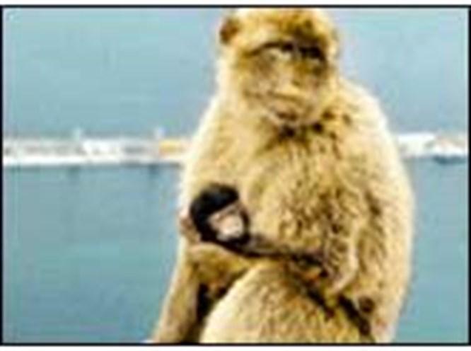 Bu maymunların işi turizm